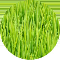 オメガ3脂肪酸 イメージ